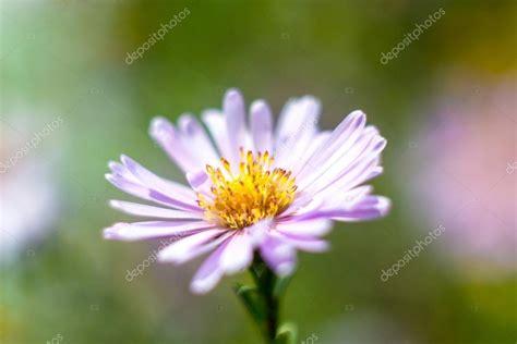 foto fiori per desktop sfondi desktop fiore viola foto stock 169 dmusienko 68266843
