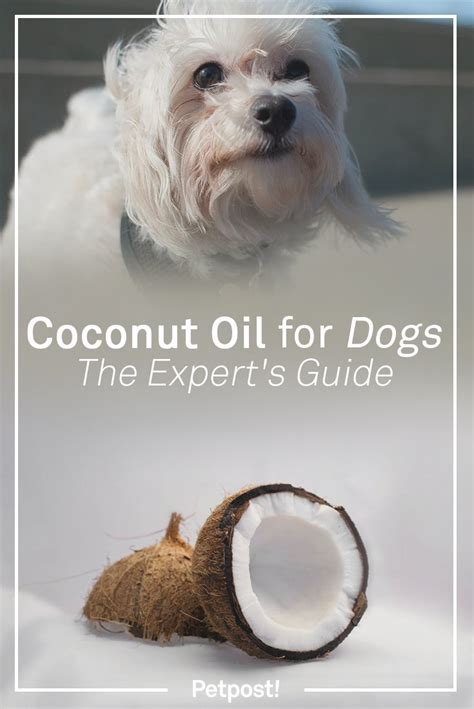 coconut for dogs ears coconut for dogs the expert s guide petpost petpost