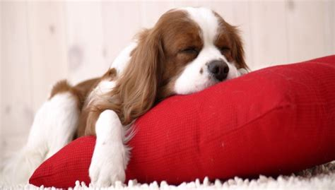 dormire bene materasso guanciali memory in soia