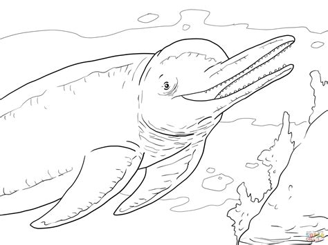 River Dolphin Coloring Page | amazon river dolphin boto coloring page free printable