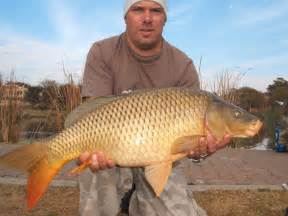 Conventional carp angling tips and information catching carp the