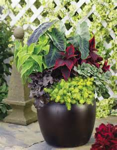 Plant Combination Ideas For Container Gardens Container Garden Design Foliage And Texture Proven Winners
