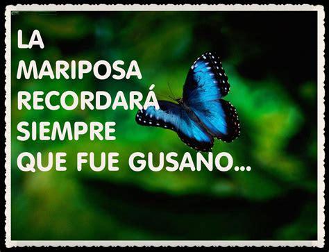imagenes de mariposas lindas con frases imagenes de mariposas bonitas con frases imagui