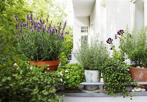 mediterrane pflanzen für den garten balkon bepflanzung idee