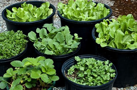 easy container gardening vegetables container vegetable gardening the easy way to a