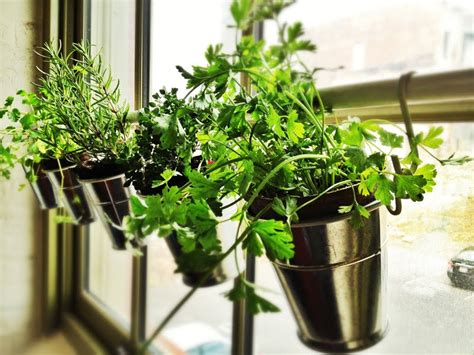 Window Herb Garden Pots Home Window Herb Garden