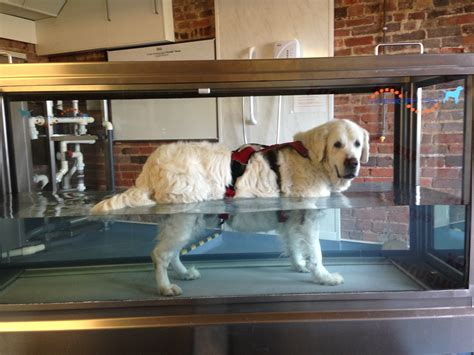 hydrotherapy for dogs why choose hawksmoor hydrotherapy centre for your pet hawksmoor hydrotherapy