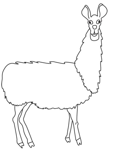 llama outline   clip art  clip art