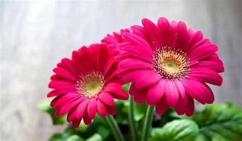 cerco immagini di fiori immagini fiori www picswe