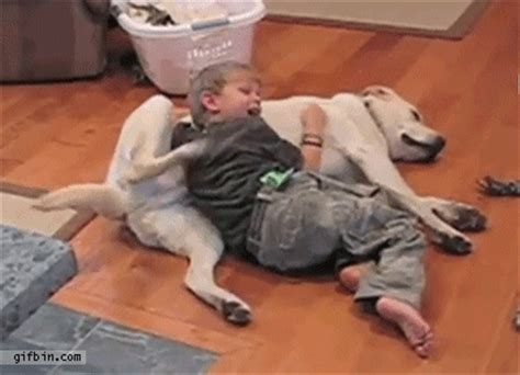 pug scratching dogs back arguments for getting a family momfluential media
