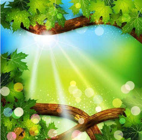 imagenes de naturaleza verdes brillante marco de la naturaleza verde con la luz del sol