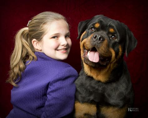 rottweiler breeders in md rottweiler rescue of maryland dogs our friends photo