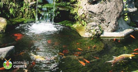 pond skimmer reviews   complete pond filtration