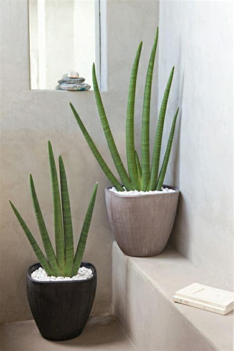 Zimmerpflanzen Feng Shui by Feng Shui Pflanzen 220 Ber Die Schutz Und Komfortfunktion