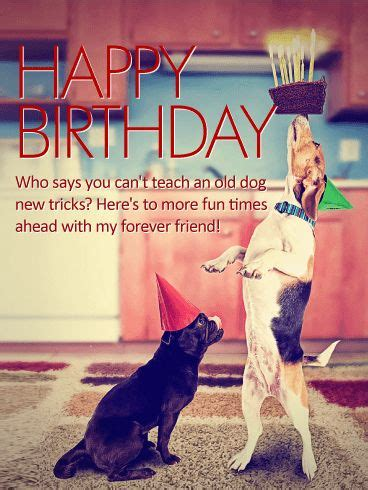 ideas  happy birthday dog meme  pinterest funny birthday  jasmine