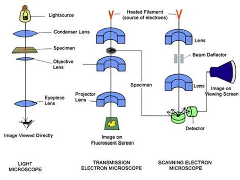 diagram of scanning electron microscope scanning electron microscope block diagram wiring