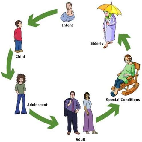 human cycle diagram human cycle stages for