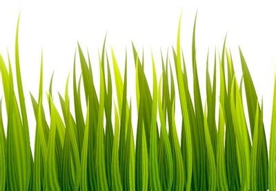adobe illustrator grass pattern download how to create a grass banner in adobe illustrator