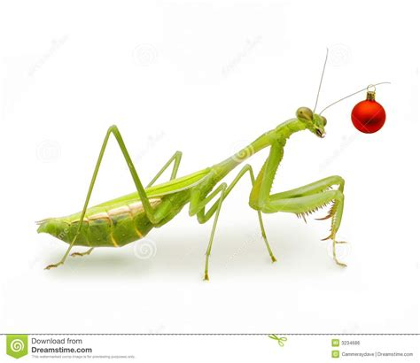praying mantis christmas dexorations australian ornament insect stock photo image 3234686