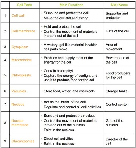 Cell Organelle Review Worksheet by Quarter 2 Copy Mrs Bhandari S Grade 7 Science
