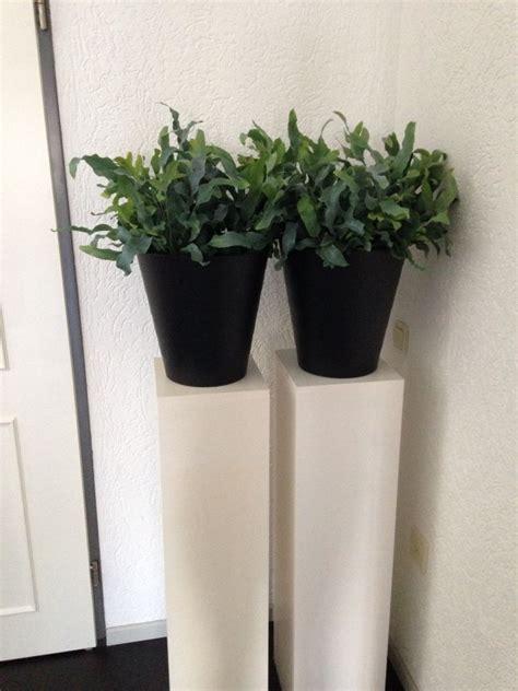 ikea plantenbak zuilen met ikea prullenbak gebruikt als plantenbak joy