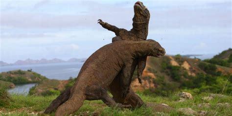 film pertarungan dinosaurus pertarungan dua komodo betot perhatian dunia dream co id