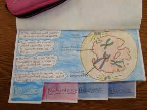 Cell cycle book ms bautista 2013 2014