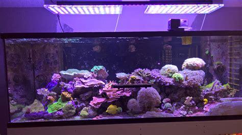 saltwater aquarium led lighting usa reef tank with our new 108 watt or 120 led bar orphek
