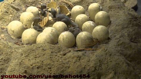 dinosaur eggs in nest 30