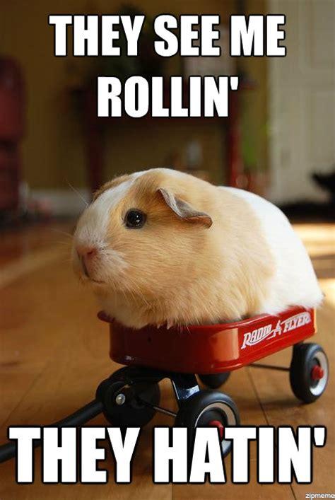 Kia Hamster Meme