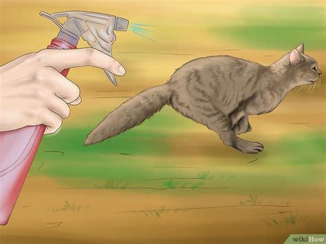 tenere lontano i gatti dal giardino 3 modi per tenere i gatti lontano dal tuo giardino