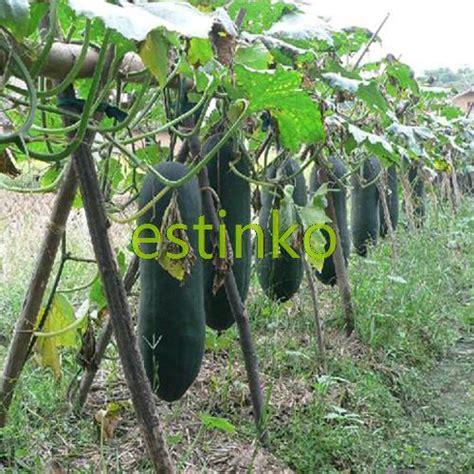 vegetable garden plants for sale black wax gourd seeds 8pcs bag black skin winter melon