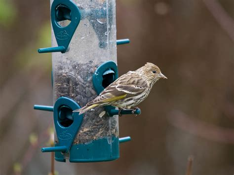 backyard bird feeding attract birds to your backyard part 3 styles of bird feeders pacific nw birder