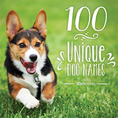 unique names for puppies 100 unique pet names for your new