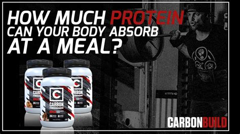 protein your can absorb how much protein can your absorb per meal biolayne