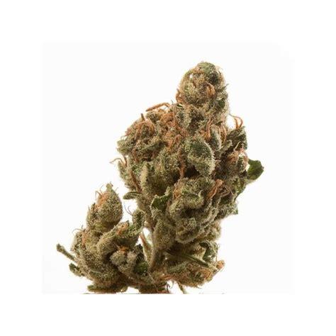 semi cannabis semi femminizzati high supplies