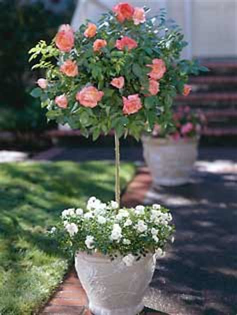 spring   thinking  tree roses decor  adore
