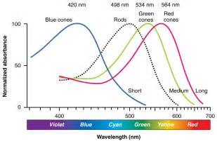 wavelength colors wavelengths of light each hue in the visible spectrum has