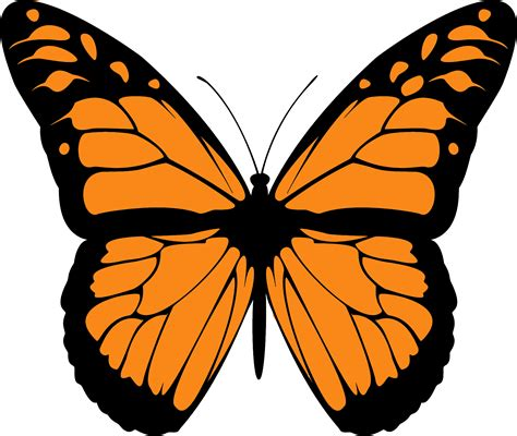 clipart farfalla butterfly clipart symmetrical pencil and in color
