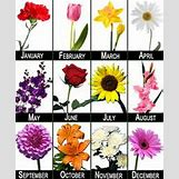 January Flower Of The Month Tattoo | 437 x 530 png 521kB