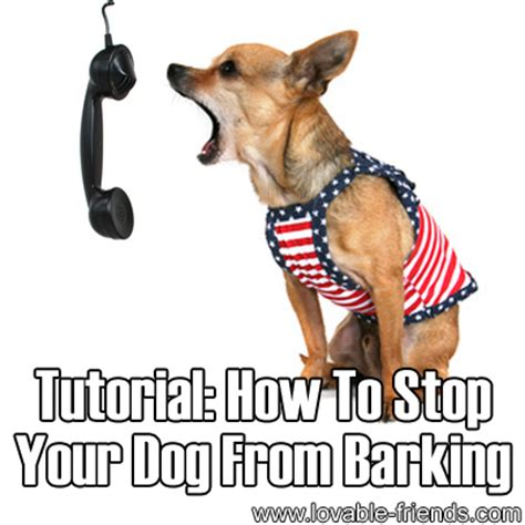 how to get dog to stop barking bloglovin