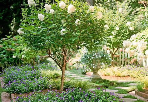 17 best images about back yard zone 7b zone 8 tolerant plants on pinterest trees and