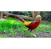 Nombre De Aves Ex&243ticas Del Mundo Y Sus Caracter&237sticas