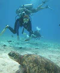 waikiki catamaran snorkeling excursion snorkeling oahu oahu snorkeling tours tom barefoot s tours