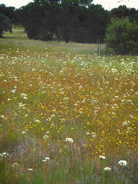 Prairie Lawn And Garden by Black Gold Create A Prairie Garden By Repurposing