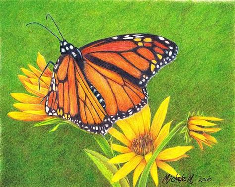 monarch color 17 best images about insects on watercolors