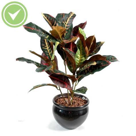 Plante D Interieur Haute