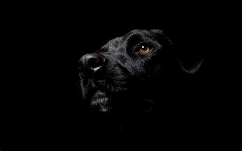 black dog daniel sierra black dog hd wallpapers for desktop backgrounds