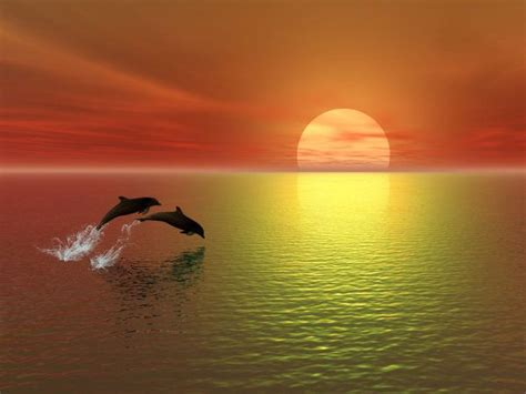 Sprei Sea Dolphine dolphin in the sunset scenery jump dolphins sea