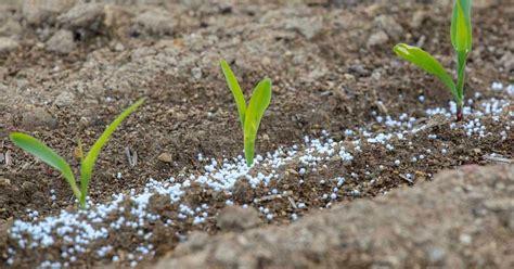 How Much Fertilizer To Use In Vegetable Garden Release Fertilizer How To Use Them In The Garden